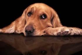 Диетотерапия собак при болезни суставов