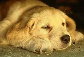 Кахексия у собак