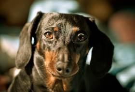 Питание собак и заболевания опорно-двигательного аппарата