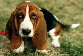 Диетология собак при болезнях сердечно-сосудистой системы