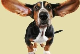 Слух собаки и голосовые сигналы