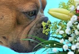 Система дыхания у собак