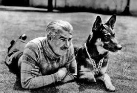 Собаки в кино и на ТВ