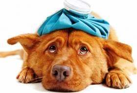 Помощь собаке в экстренных ситуациях