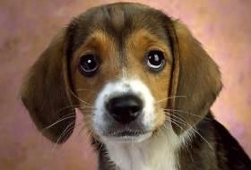 Болезни собак - симптомы и лечение