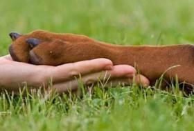 Эностоз и цервикальная спондилопатия у собак
