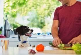 Что делает витамин Д для собак