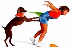 Собака ворует из кармана