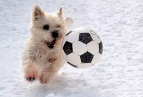 Собака футболист