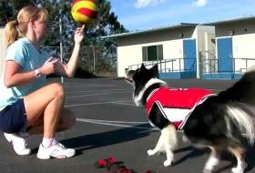 Собака играющая в баскетбол