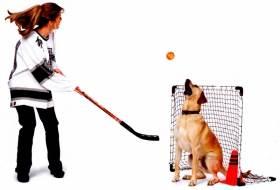 Собака - хоккейный вратарь