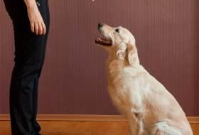 Как научить собаку команде