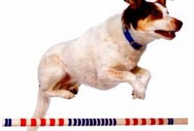 Как научить собаку команде «Барьер»