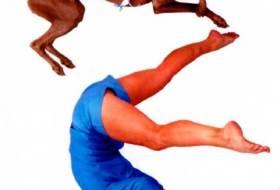 Прыжок и кувырок собаки