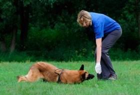 Как научить собаку команде «Ползи»