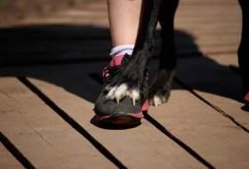 Как научить собаку ходить между ног