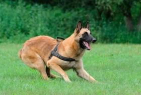 Лунная походка – обучение собаки