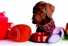 Понимающая собака – распознавание предметов