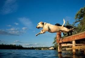 Прыжки собаки в заданном направлении