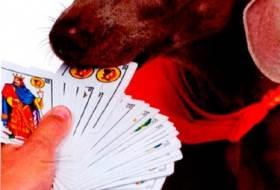 Фокус с собакой и картами
