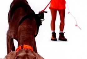 Работа собаки по следу - команда