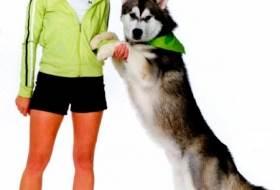 Дружеское приветствие собаки