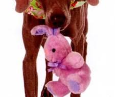 Убери игрушки - команда для собаки