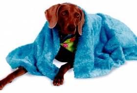 Команда собаке «Под одеяло!»