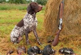 Инстинкт добычи у собаки и оборонительный инстинкт