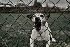 Реакция избегания и обороны у собак