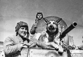 Знаменитая кличка собаки минно-розыскной службы