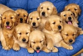 Лучшие клички собак кобелей