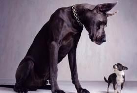 Какое значение имеет кальций для собак