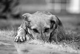 Собака умирает - что делать?