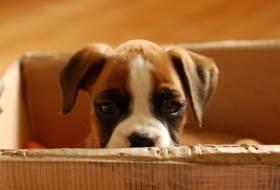 Зачем нужно взять собаку из приюта