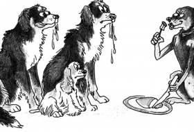 Этология собак
