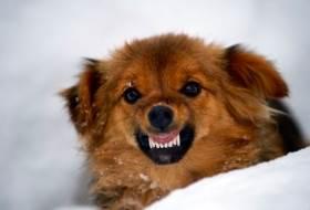 Психология поведения собак