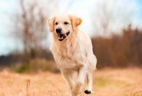 Мытье собак с комбинированным типом шерсти