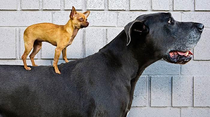 Крупные собаки породы