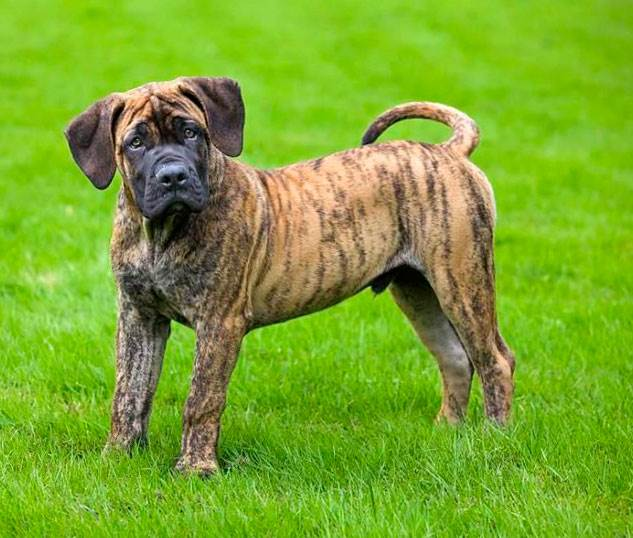 Породы собак фото видео описание характеристики породы