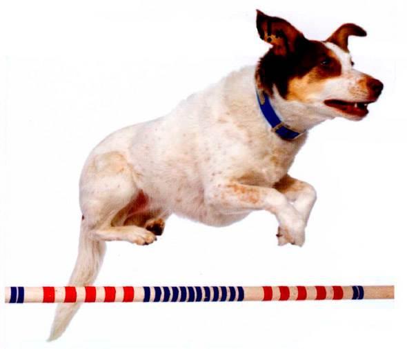 Как подстричь собаку в домашних условиях ножницами и машинкой: видео