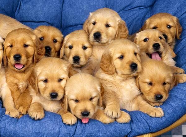 картинки собачки много в одной