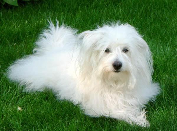 Собаки собачки моя собака  Petsikru